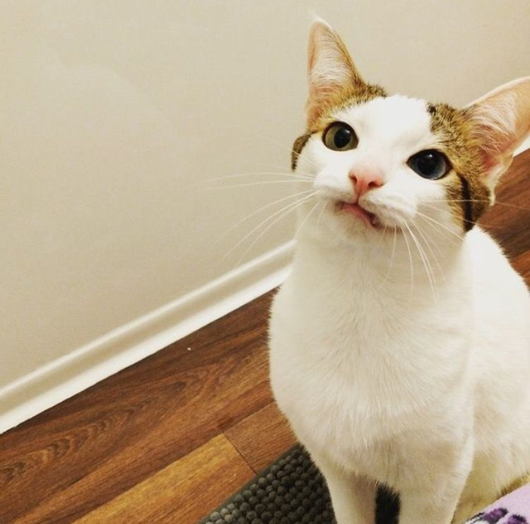 'Tag a Cat' Is Basically Tinder For Cat Lovers