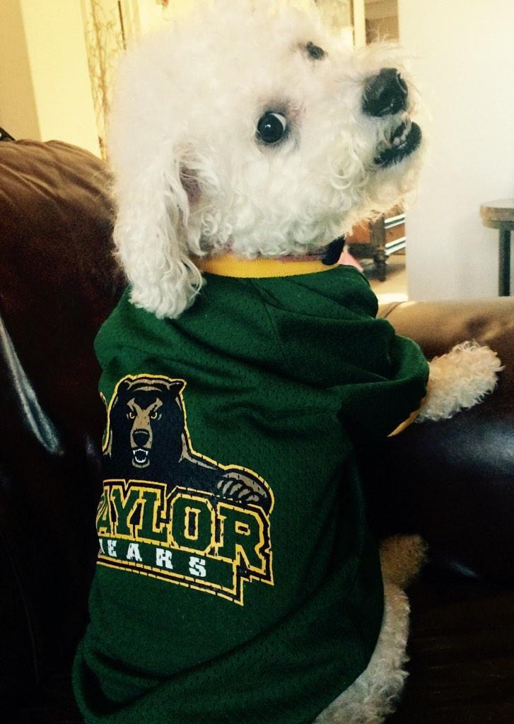 892b3a014ed BaylorProud pup in a #Baylor jersey! #SicEm | Baylor Pets ...