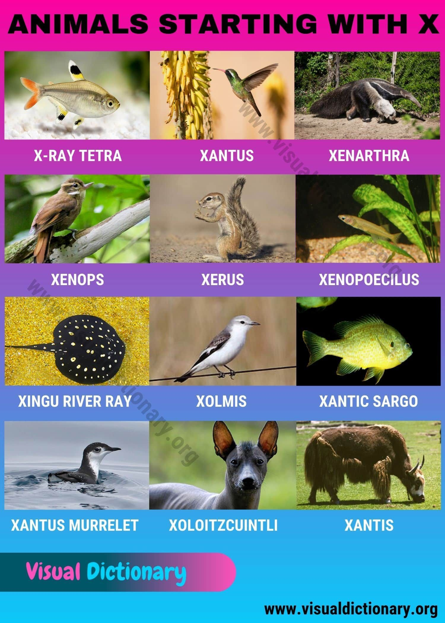 Animals Starting With X In 2020 Visual Dictionary Animals Pet Names