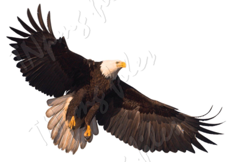 PNG EAGLE, cut file Download, bird, fauna