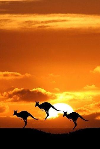 BEAUTIFUL kangaroos