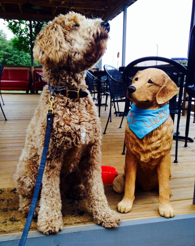 Out To Lunch At Lucky S Indy The Goldendoodle Training For To Be