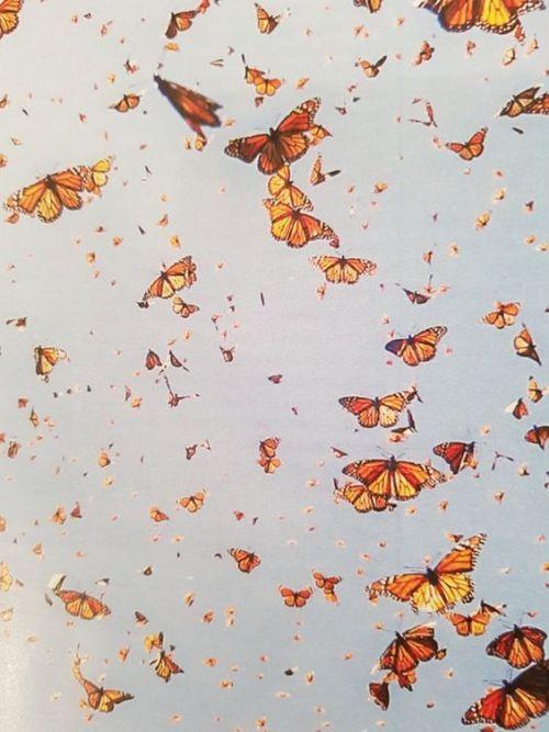 Wallpaper Tumblr Retro Butterfly Aesthetic Background