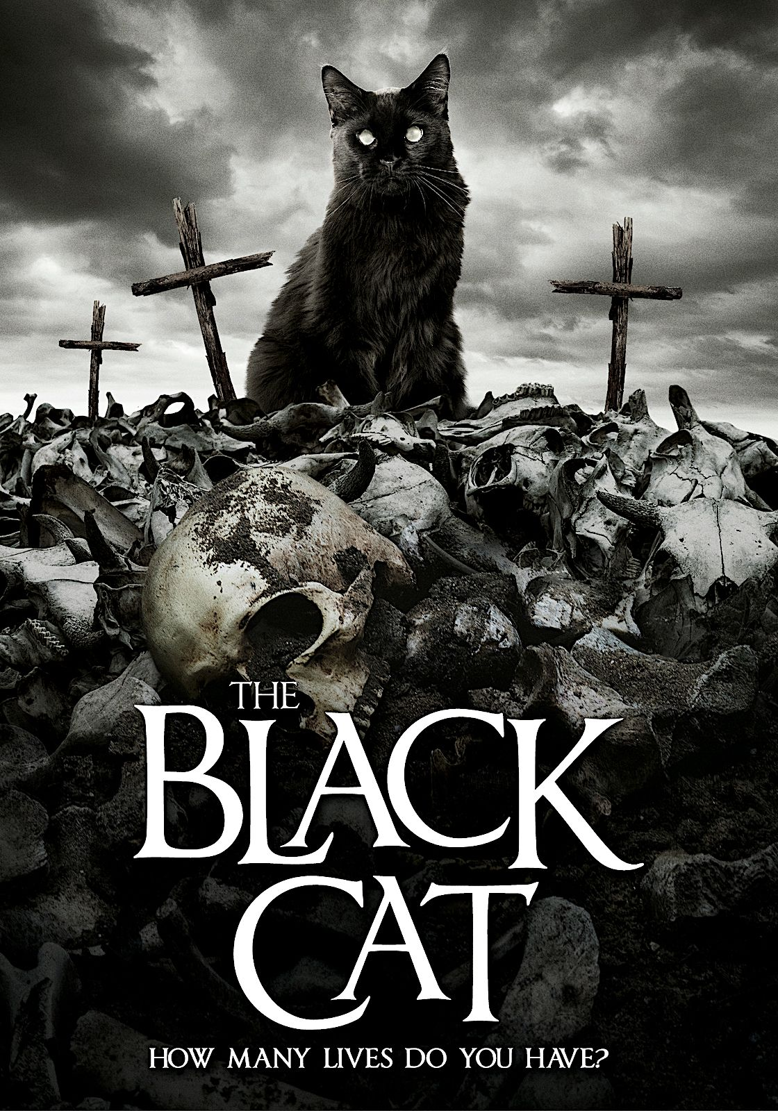THE BLACK CAT DVD (WILD EYE RELEASING) in 2020 (With
