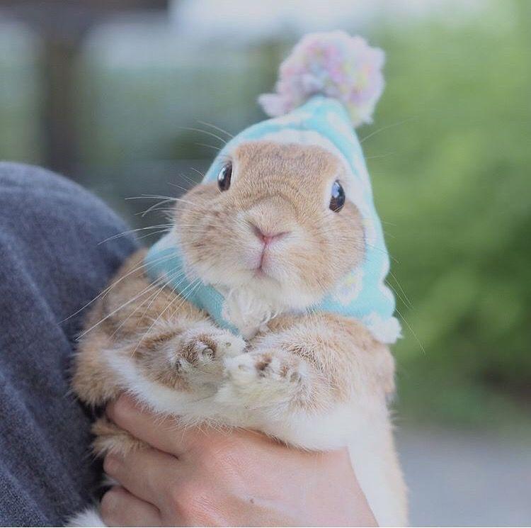 Adjustable Pet Rabbit Hats For Sale Pet Rabbit Toys Cute Baby Bunnies Pet Rabbit