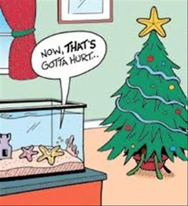 Bad Christmas Jokes.Ouch Sorry Bad Christmas Joke Christmas Funny Christmas