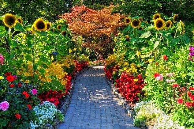 Xeriscape Backyard Garden Design Backyard Gardening Pinterest