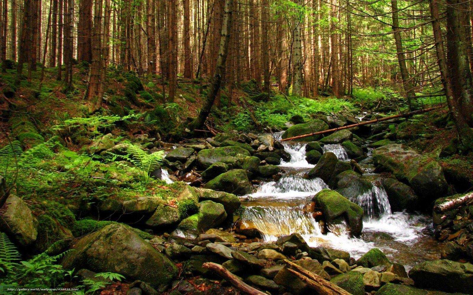 Pobra Tapety Ukraina Gorgan Zakarpacie Strumie Lasu Darmowe Tapety Na Pulpit Rozdzielczoci 1680x1050 Zdjcie 439838 Outdoor Outdoor Decor Waterfall