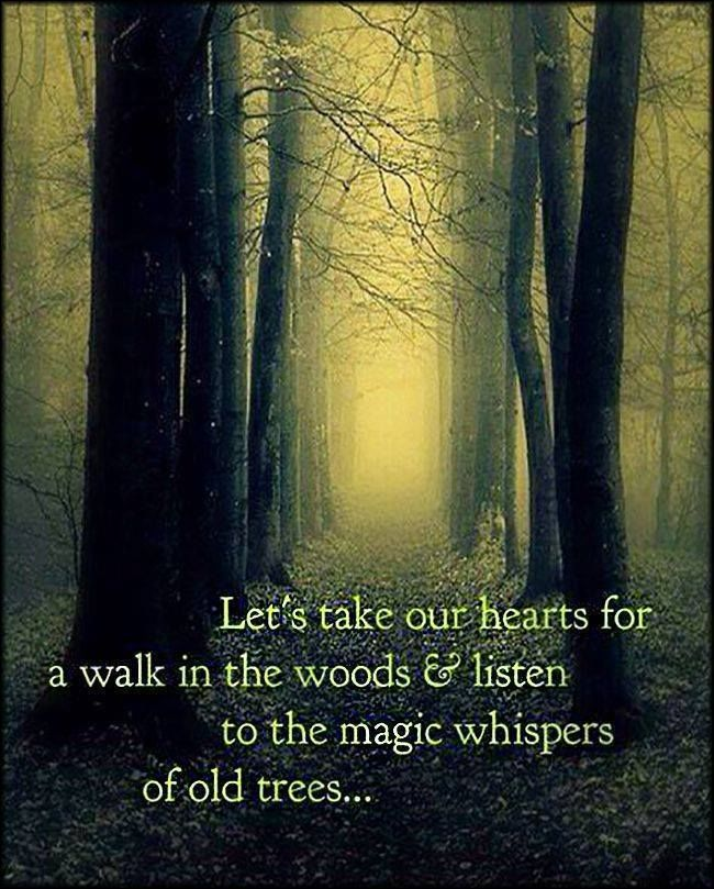 Let's take our hearts for a walk in the woods to listen to the magic whispers of old trees...