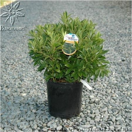 Lowe S Nursery Plants Thenurseries