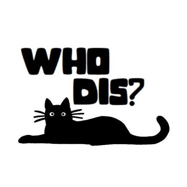 WHO DIS CAT Funniest Car Truck Decal Sticker Best Skater - Funny decal stickers for carsbest funny car decales images on pinterest funny cars