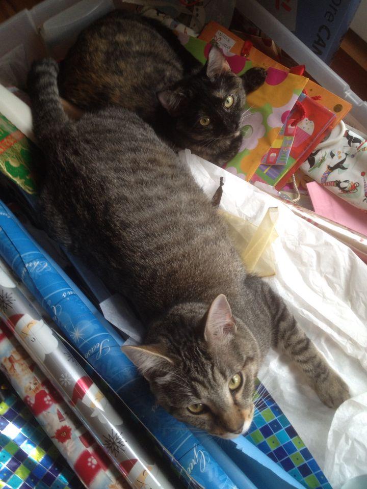 Oliver & Penelope