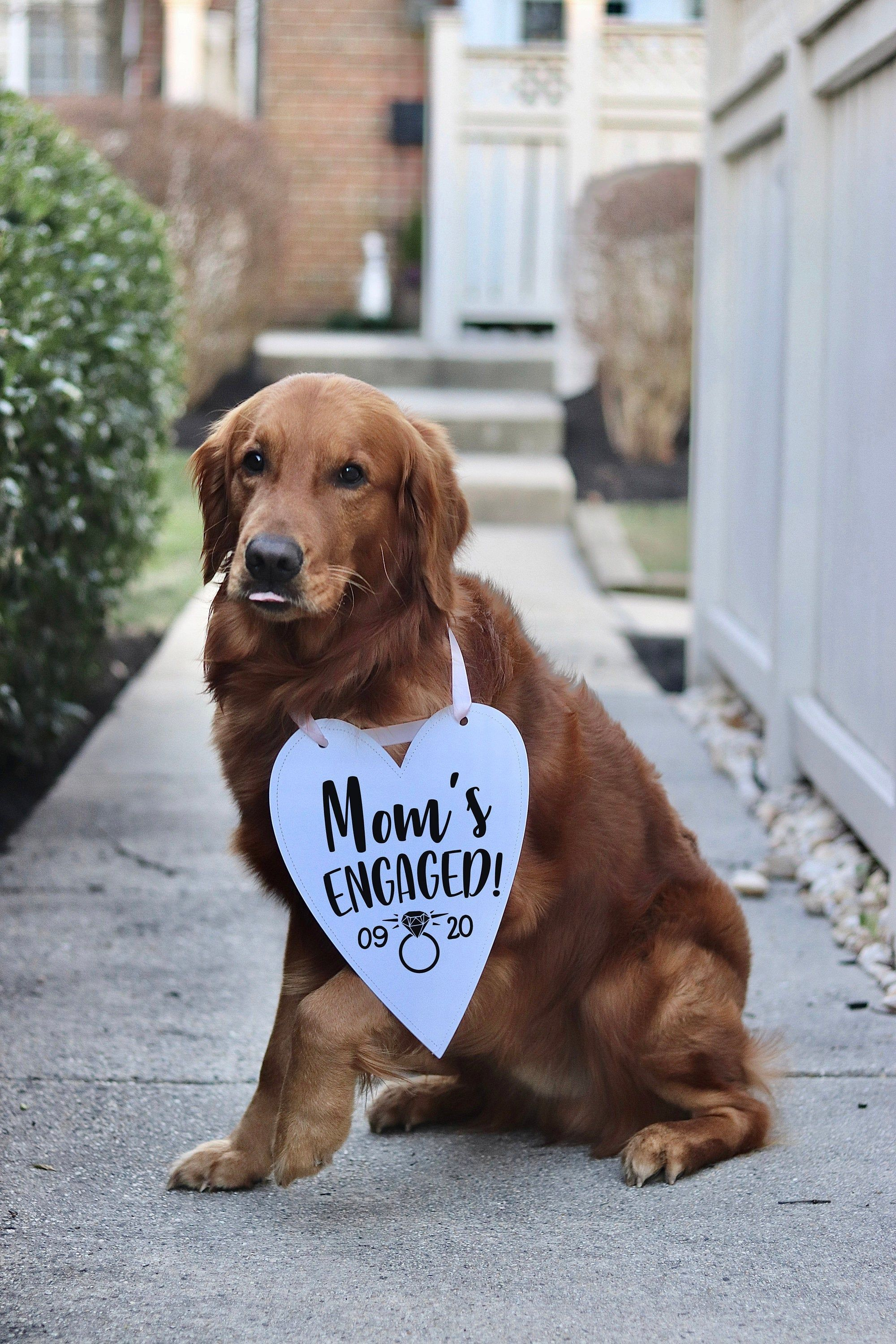 Photo of Mom's Engaged! We're Engaged! Wedding Announcement Bow Tie Engagement Photo Shoot Special Occasion Dog Sign Dog Photo Prop Sign Photo Shoot