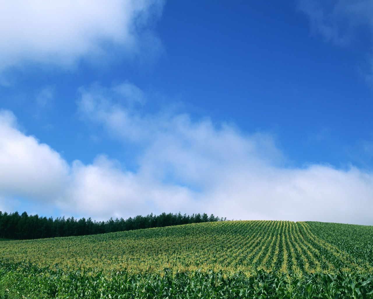 Blue and white wallpaper 7997 - Green sky - Landscape scenery