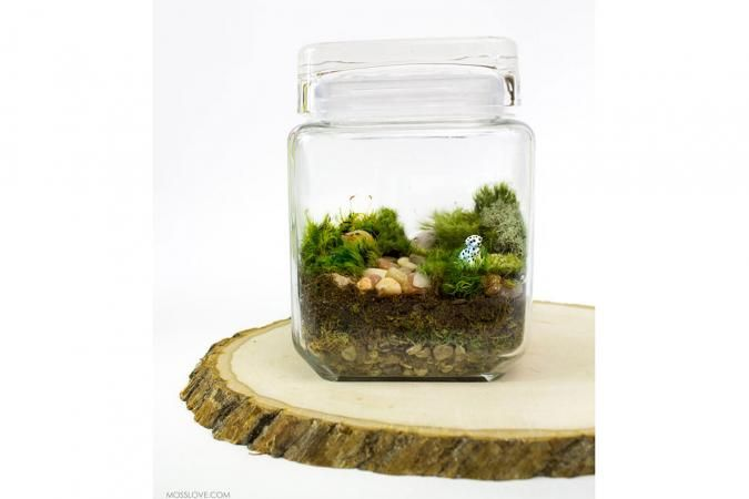 10 Unusual Gifts for Dog Lovers // Love to Know // Dog Terrarium by Moss Love