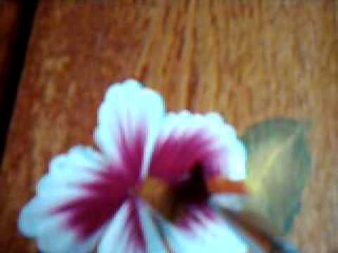 One Stroke Flowers Crafts And Art Pinterest Nail Arts One