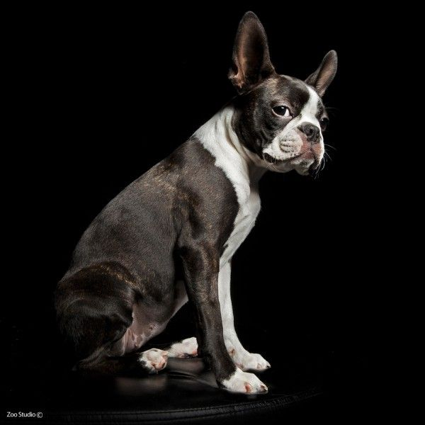 Shoot from Zoo Studio - awesome dog photography