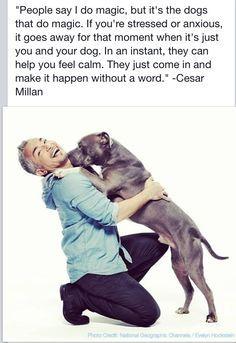 Cesar Millan Quotes Google Search Cesar Millan Pitbull