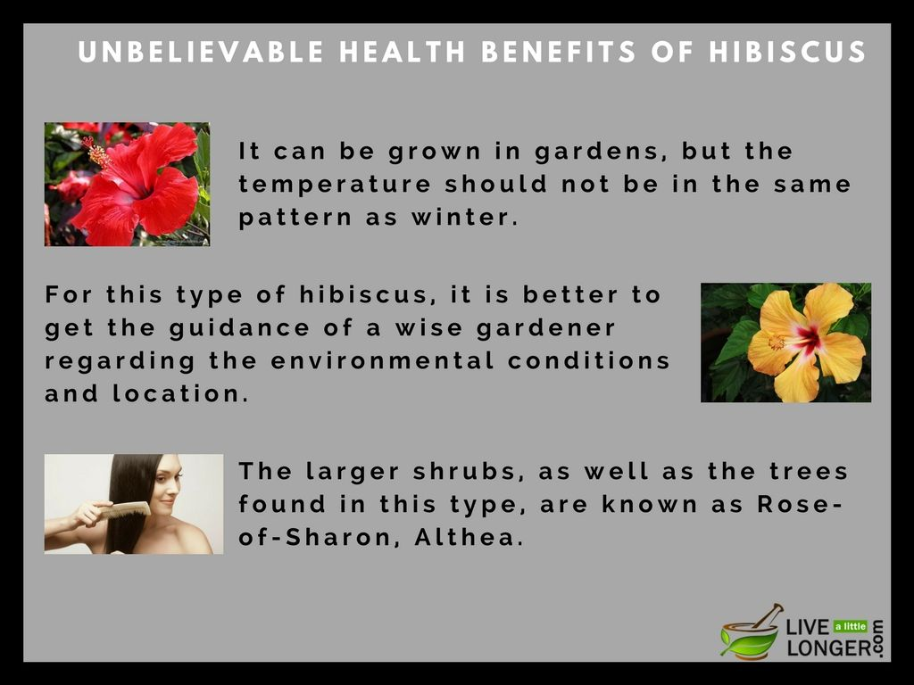 Health Benefits Of Hibiscus Tea And Flower Are Plenty Hibiscus