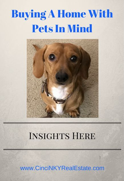 Buying A Home With Pets In Mind Home Buying Home Renovation Loan Real Estate Articles