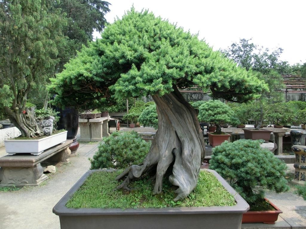 1000 Ideas About Bonsai Nursery On Pinterest Bonsai Plants
