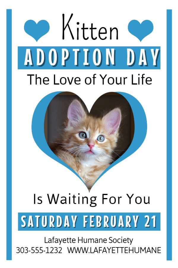Pet adoption flyer template Lost Pet and Pet Adoption Flyers