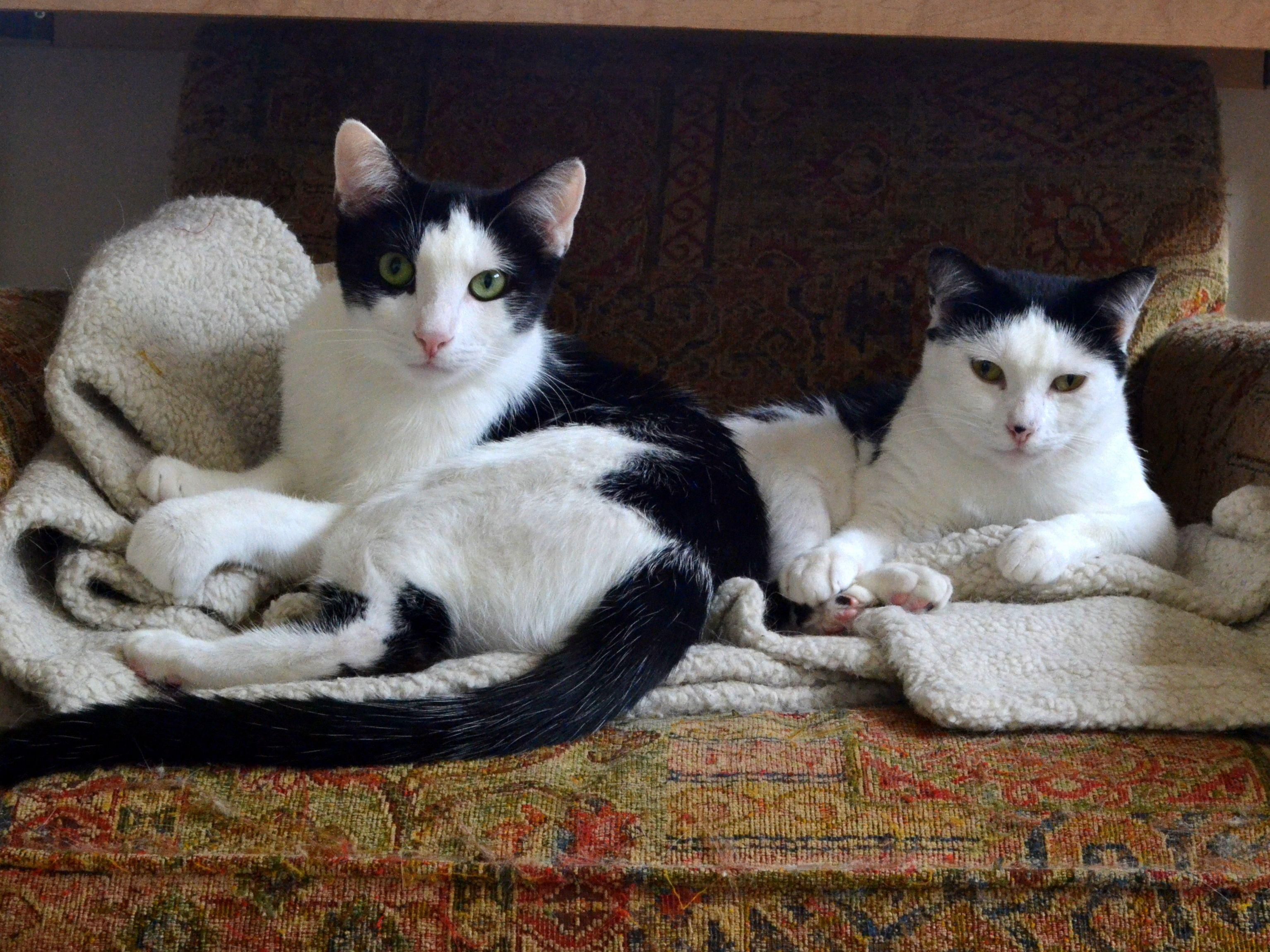 Dsc 0006 Cat People Cats Animals