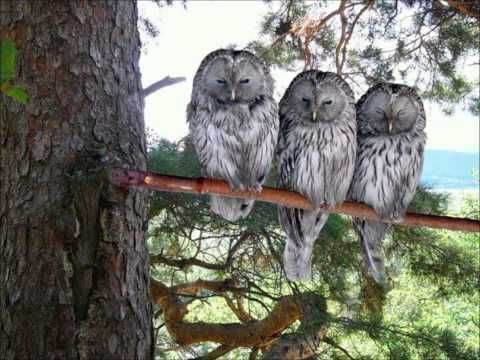 The three wise men - I mean owls!! Three heads are better than one!