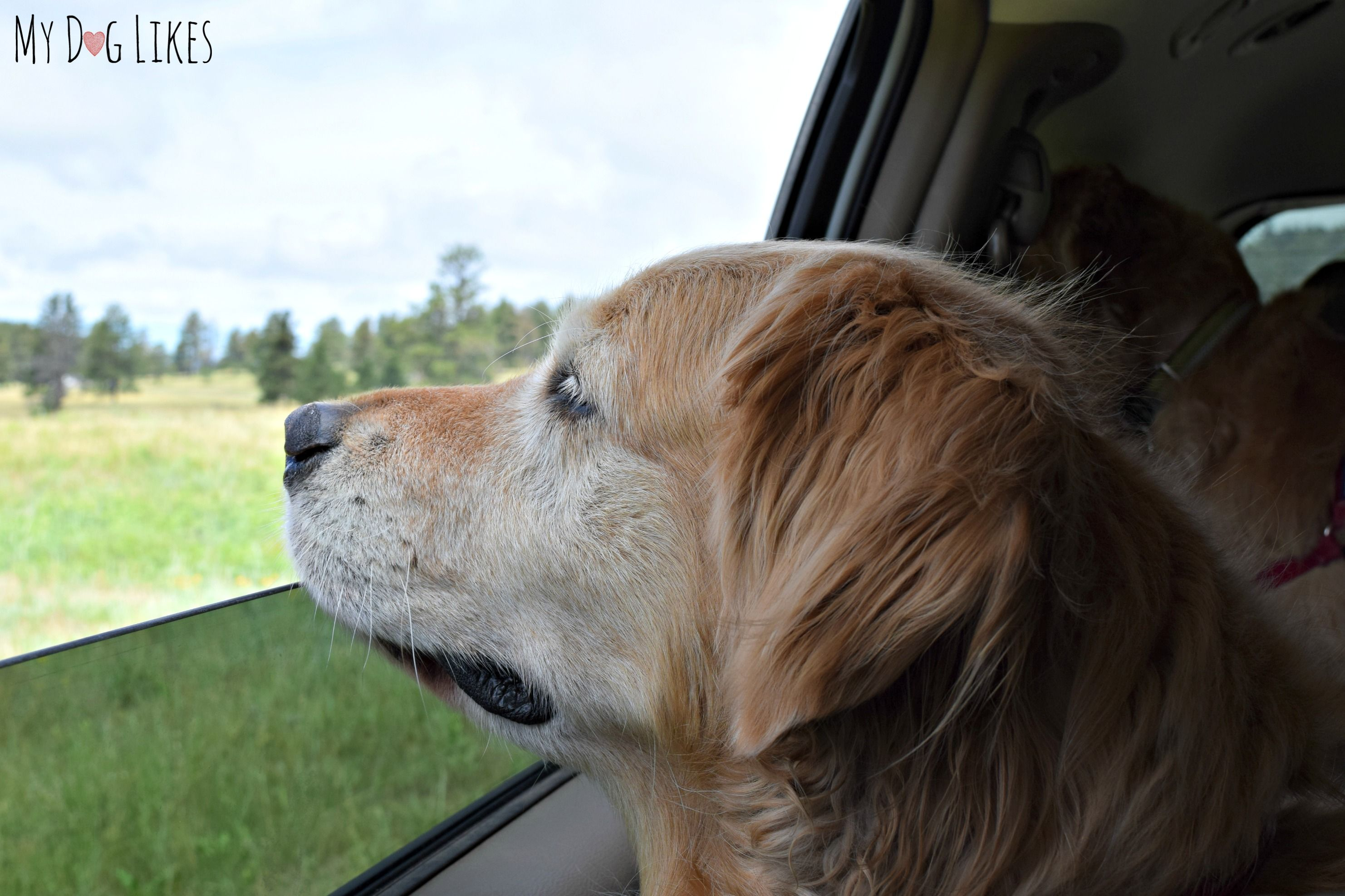 Visiting Custer State Park With Dogs A Black Hills Gem Group
