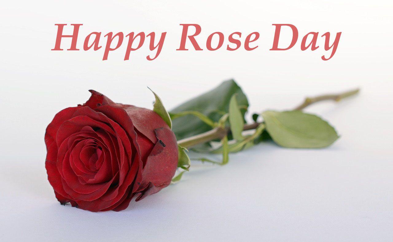 Download 4k Hd Celebration Wallpaper For Desktop All Hd Wallpapers Rose Day Wallpaper Good Night Flowers Happy Rose Day Wallpaper Happy rose day images hd download