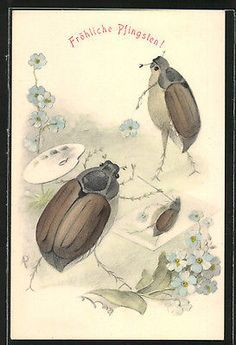 Insects ~ Postcards ⭐   on Pinterest   Postcards, Beetles and ...