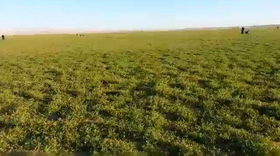 بالفيديو جمال روضة ام الشقوق بـ ثادق شبكة سما الزلفي Outdoor Farmland Vineyard