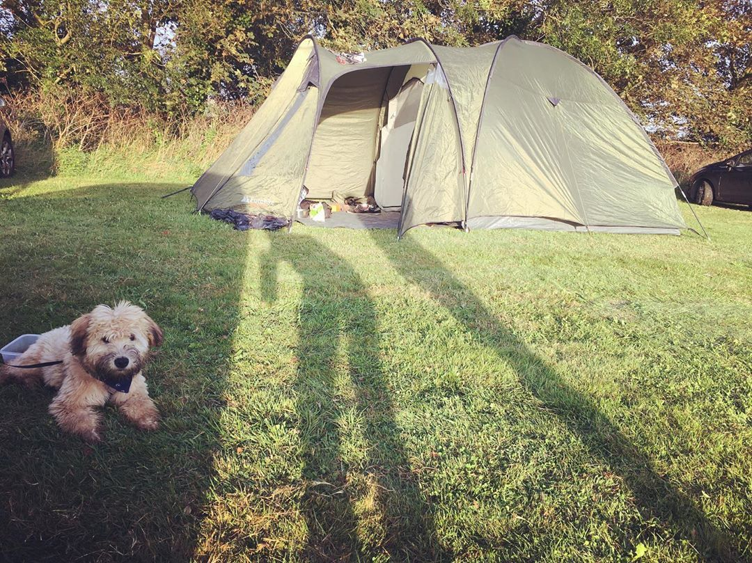 Back From My First Camping Trip Adventure My Hoomans