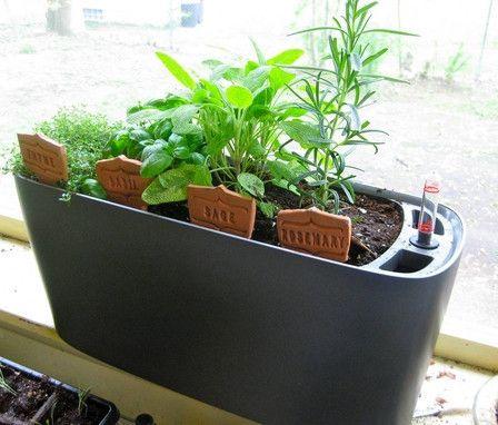 Lechuza Windowsill Herbs Self Watering System Sub Irrigated