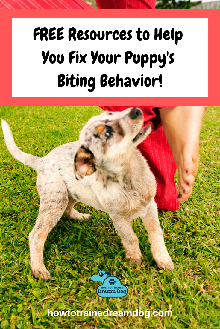 Ready to STOP your puppy's frustrating biting & chewing