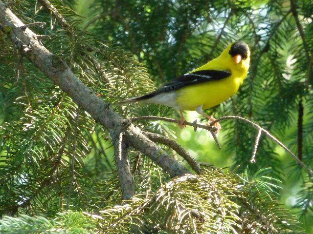 Fair Isle: Minnesota Wildlife - Butterflies, Frogs and BIRDS ...