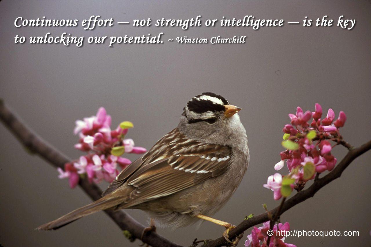 Sayings, Quotes: Winston Churchill | Photo Quoto