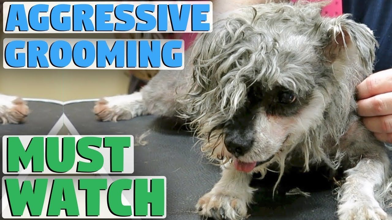 Grooming My Dog Is A Nightmare Dogs Pets Dog Grooming