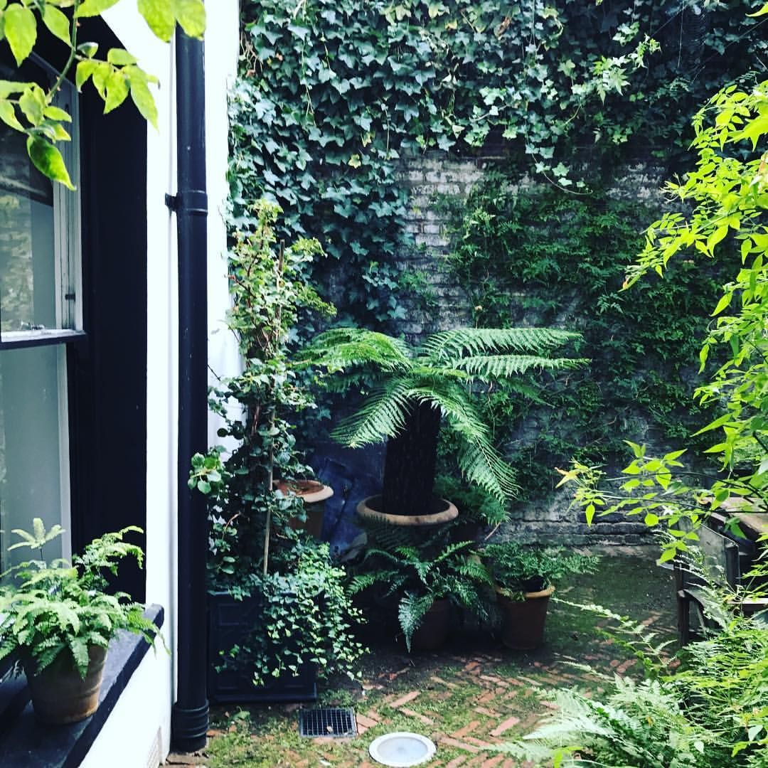 Ferns, white jasmine, ivy and moss getting on well in the little courtyard outside the kitchen. A 'rescued space' surrounded by high walls, it offers protection against the extremes of the weather, being cool in summer, warm in winter and always a little on the damp side.
