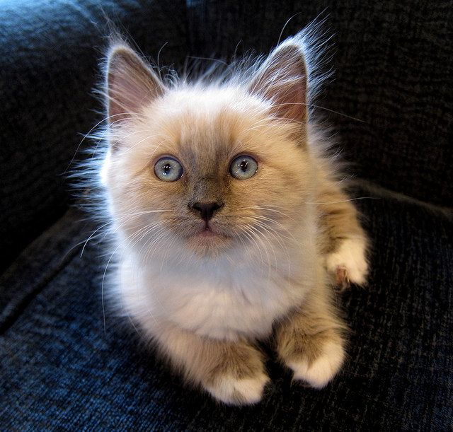 <b>Not sure if you can handle this bomb of adorable.</b>