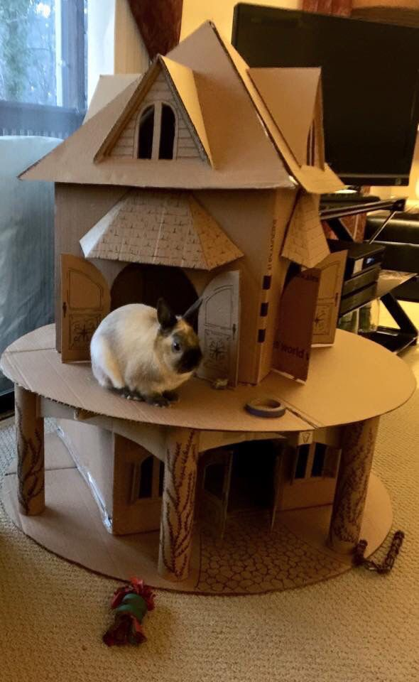 Pin By Angoras And Lionheads Oh My On Bunny Castle Diy Bunny Toys Bunny Cages Indoor Rabbit