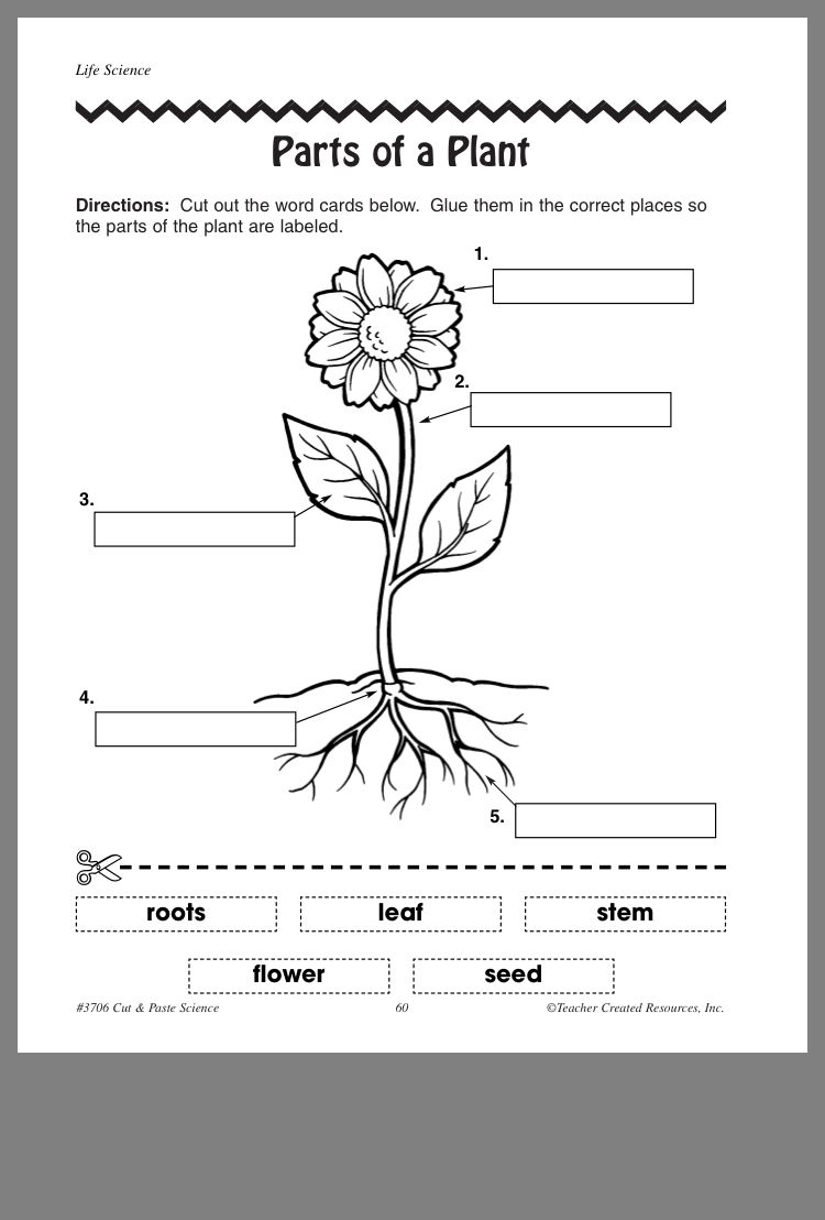Pin by Roqia Nassar on Kindergarten Plants worksheets