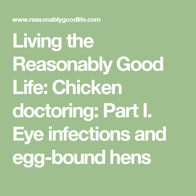 Chicken Doctoring: Part I. Eye Infections And Egg-bound