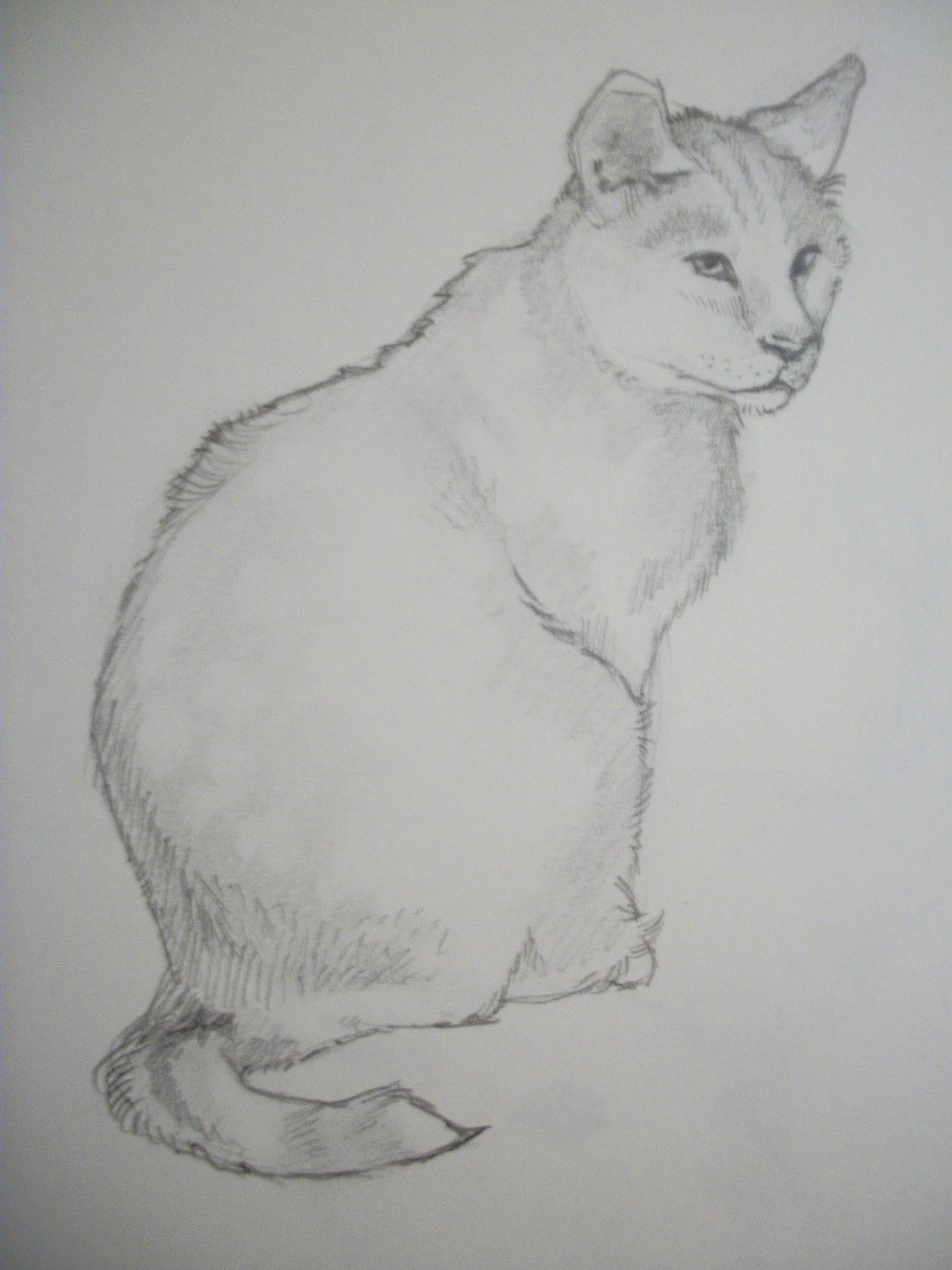 How to draw a cat in eight simple steps