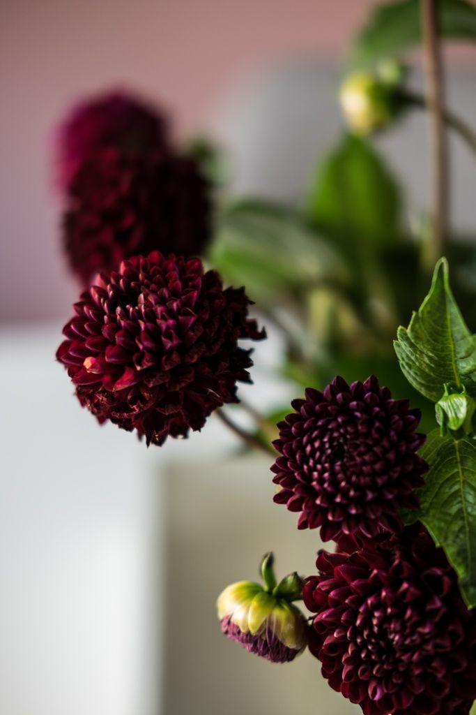 Blumendeko Herbst blumendeko im herbst mit dunkelroten dahlien by fim works lifestyle