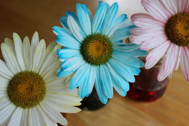 Painted Daisies Another Artful Science Experiment Science Experiments Science For Kids Science Experiments Kids