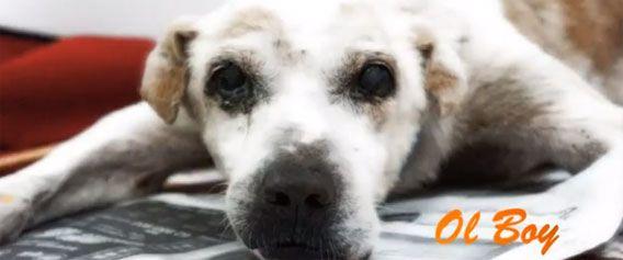 生と死のレッスン:路上で生まれた野良犬、「オールボーイ」最後の時