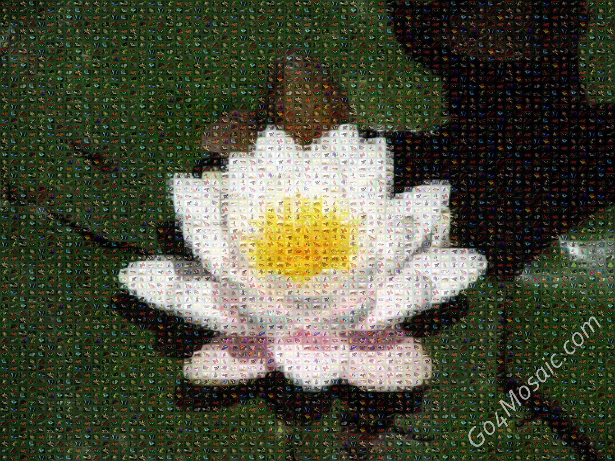 Lotus flower mosaic from butterflies filamingo pinterest explore lotus flower seeds white lotus flower and more izmirmasajfo