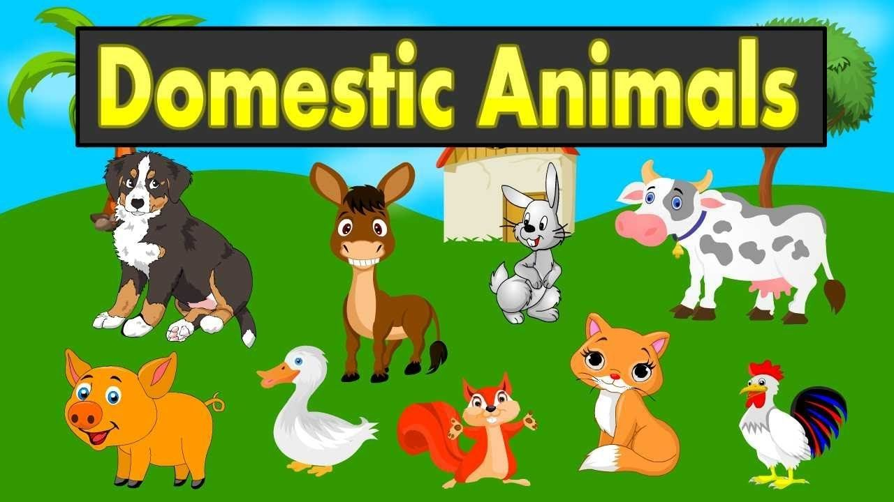Domestic Animals Names For Kids Farm Animals Youtube Kid2teentv Animals For Kids Animal Sounds Animals