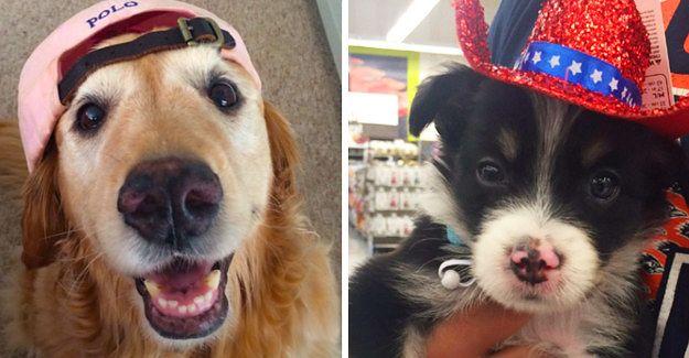 19 Dogs Wearing Hats For Anyone Who S Having A Ruff Day Dog Wear Hats Ruff